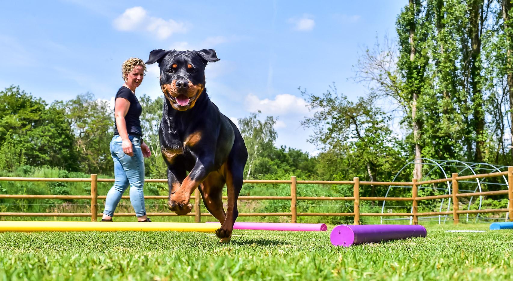 Kracht op Poten - CREF-behandeling met honden en paarden, in Twente